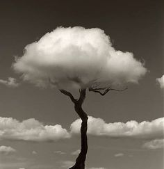 black and white #tree