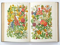 """Vintage flower book - """"Our Country's Flowers"""" £35"""
