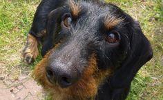 Karmy dla psów z nadwagą:  http://www.kakadu.pl/Karmy-dla-psow/karmy-dla-psow-z-nadwag.html
