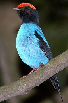 Blue Maniken