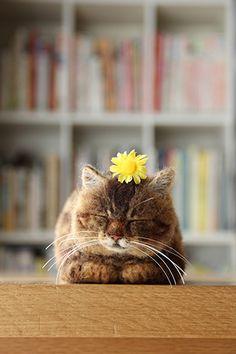 Midofelt mini cat