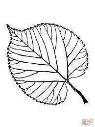 Resultado de imagem para desenho de folhas de arvores