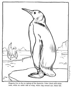 penquin coloring page sheet zoo animals