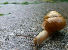 #snail #moving #myphoto📷 Snail, My Photos, Photography, Animals, Photograph, Animales, Animaux, Fotografie, Photoshoot