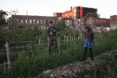 5 tips for launching an urban community garden! Bring your community together in delicious, climate-Cooling action!