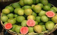 Guava-fruit-tree-Many-varieties-Rare-Yummy-Easy-grow-Seeds