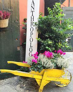 I cortili di Milano ti sorprendono sempre  #milano #cortilimilanesi #cortili #casedicorte #milanodavedere #milano #milan #vivomilano #loves_united_milano #loves_bestpic #loves_milano #top_favorite_flowers #milano_forever #whywelovemilano #flowers #antropology #mymilano #like #iphoneonly by butterfly.79