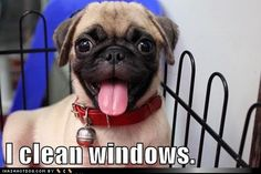 pug - Loldogs - Dogs - Puppy Dog Pictures - I Has A Hotdog! on imgfave Funny Pug Pictures, Dog Pictures, Pug Photos, Funny Pix, Funny Stuff, Funny Dogs, Funny Animals, Cute Animals, Raza Pug