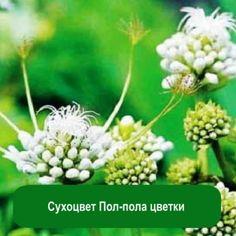 Сухоцвет Пол-пола цветки, 1 кг
