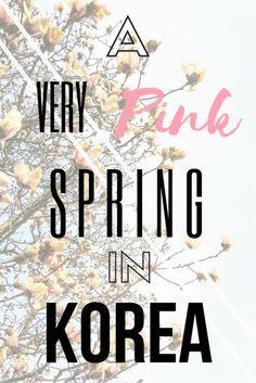 KOREA TRAVEL・A Very Pink Spring in Korea