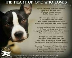 Once you have loved one, you love them all. Because I've given MY heart to a pet it will never again belong to me, a little piece breaks off to travel with every homeless pet I see. I Love Dogs, Puppy Love, Love You, Dog Quotes, Animal Quotes, Dog Poems, Pit Bull Love, Animal Rescue, Rescue Dogs