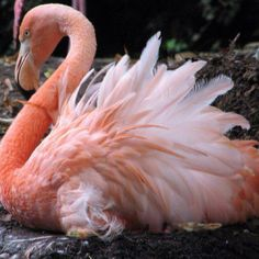 Lovely pink flamingo