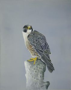 Peregrine Falcon- Falcon Meanings and Symbolism  The Falcon animal totem comes to us when we require higher vision, or higher knowledge in solving current dilemmas in our lives.  The Falcon is a solar emblem for success, victory and rising above a situation.