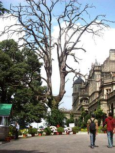 The Viceregal Lodge, Shimla  #shimla #himachal #beautiful #old #building #history #travel #wander