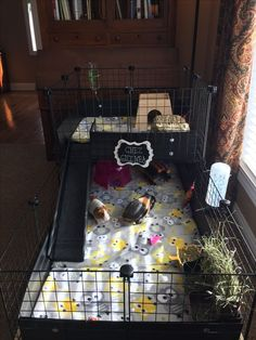 Talk about a stylish cage! Diy Guinea Pig Cage, Guinea Pig House, Pet Guinea Pigs, Guinea Pig Care, Cavy Cage, Pet Cage, Hamsters, Chinchillas, Gerbil
