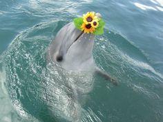 Dolphin base ~Eisu More