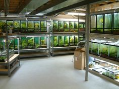 How to set up many tanks in a basement. literally amazing!!