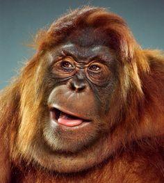 monkey portrait - jill greenberg