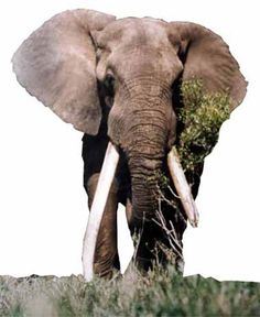 Shingwedzi Азиатский Слон, Животные, Африка, Животные