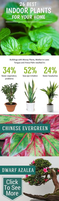 Best Indoor Plants to Help Purify Your Air More