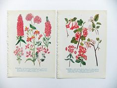 Vintage Flower Illustrations - great for crafting and scrapbooking! #folksy #peonyandthistle