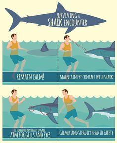 Surviving a Shark Encounter