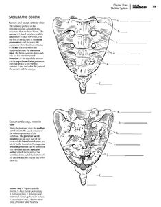 Kaplan Anatomy Coloring Book.pdf   boudli   Pinterest   Anatomy and ...