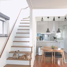 部屋とチワワシリーズ28  ・  家を建ててから5年…ずっと気になっていた階段の蹴上がり部分をリメイク💕  ・  白い壁紙を貼ると反射のお陰でリビングが明るくなった気がする✨  ・  最後の写真は普段の写真…ワンコが階段を上がれないようにアクリル板に100均のネットを付けて置いています  ・  ・  ・  #チワワ  #ロングコートチワワ #ロンチー #chihuahuafanatics #Chihuahua #犬#わんこ#ワンコ#chihuahuasofinstagram#チワワ部 #多頭飼い#インテリア#白黒病#白黒インテリア#シンプルモダン#シンプルモダンインテリア#シンプルホーム#ナチュラルモダンインテリア#ナチュラルモダン#mygoodroom#  #リビング階段 #階段 #階段リメイク #diy
