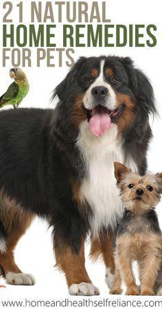 21 Home Remedies for Pets!///Conveniente informacion, sobre todo para dar los primeros auxilios, no siempre hay un veterinario cerca.