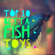 Did you know you could get toys for your betta fish? Find out the top ten toys and never have a bored Betta fish again!