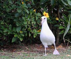 "Hula dancers wear flowers. ""Moli"" is Hawaiian for albatross. Miss Moli Aloha Hula?Embedded image permalink"