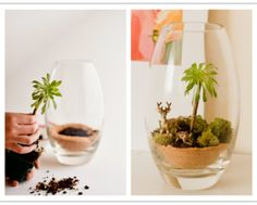 How-to-make-DIY-terrarium