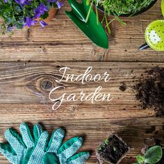 Don't want to go outside to plant a garden? You can plant it right in your home. Here are some tips on how to plant your indoor garden. #IndoorGarden  Indoor Spring Garden http://belladeuxevents.com/indoor-spring-garden/