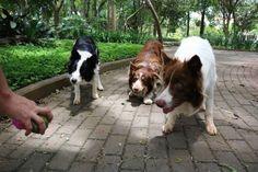 17 fotografías que prueban que mientras más perros tengas en casa más amor habrá en tu hogar
