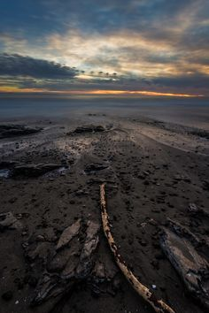 https://flic.kr/p/ChN2JE | Weathered Log - Santa Barbara | A weathered log on the shores of Santa Barbara during a beautiful sunset.