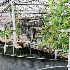 Fisgando peixes - e plantas | Scientific American Brasil | Duetto Editorial