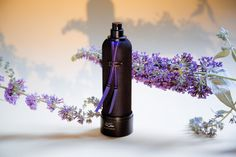 Humble Purple Mens Perfume 3 x Pack