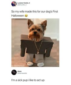 So my wife made this for our dog's First Halloween e I'm a sick pup i like tc act up - iFunny :) Dog Memes, Dankest Memes, Funny Memes, Jokes, Animals And Pets, Funny Animals, Cute Animals, Funniest Animals, Best Funny Photos