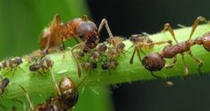 Protect your garden against harmful insects using natural insecticides.