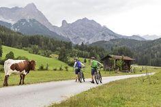 Tierische Begegnungen beim Mountainbiken rund um die BEWEGTEN BERGE sind keine Seltenheit Bergen, Sports Training, Boutique, Animals, Round Round, Animales, Animaux, Animal, Animais