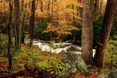 Take advantage of these absolutely free things to do in Gatlinburg, so a trip to the Smoky Mountains can be fun and budget-friendly. Tennessee Hiking, Gatlinburg Tennessee, Tennessee Vacation, Smoky Mountain Christmas, Smoky Mountains Tennessee, Hiking Routes, Smoky Mountain National Park, Road Trip Hacks, Free Things To Do
