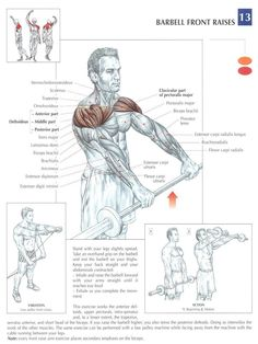 .Barbell Front Raises. I prefer doing these with dumbbells, alternating arms so I can focus on just one shoulder at a time. Great illustration of the shoulder & arm muscles. #Exercises #Shoulders