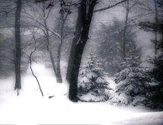 blizzard.jpg (500×386)