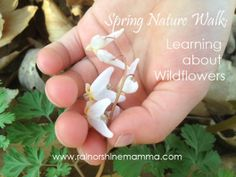 Spring Nature Walk: Learning about Wildflowers. Rain or Shine Mamma