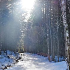 Our multi-purpose trail system is open year-round! This season is great for snowshoeing and cross country skiing. Cross Country Skiing, Lakes, Purpose, Trail, Outdoor, Outdoors, Outdoor Games, The Great Outdoors, Ponds