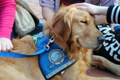 Comfort dogs in Boston... <3 beautiful, there is nothing on earth that can compare to the unconditional love and support of a dog