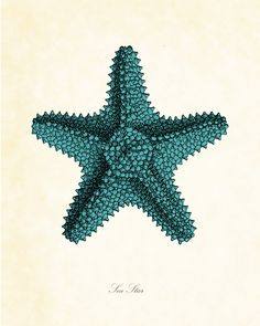 Vintage Sea Star Starfish in Aqua 8 x 10 Art Print