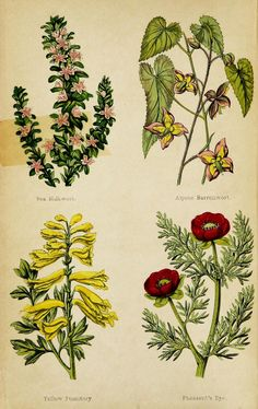 Wayside weeds, or, Botanical lessons from the lanes and hedgerows : - Biodiversity Heritage Library