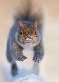 whitewinter–hymnal:  beautiful-wildlife:  SquirrelbyStefano Ronchi  ❄️