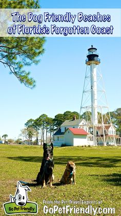 The Dog Friendly Beaches of Florida's Forgotten Coast Make A Great Pet Friendly Vacation Destination!